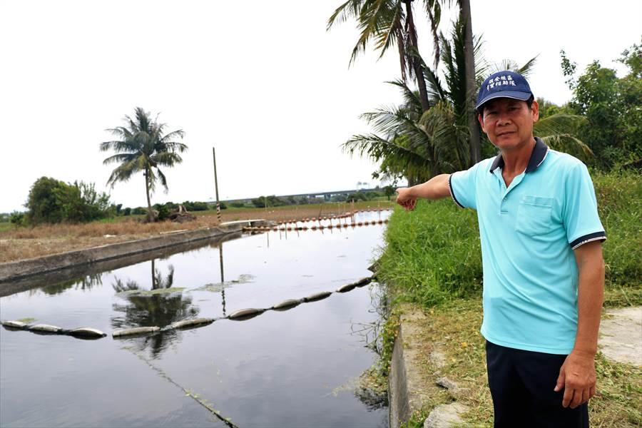 鎮安村長謝坤霖說,緊鄰南埔埤排水的溼地確實曾吸引許多候鳥過境棲息,但自布袋蓮肆虐後,溼地環境變得很不好。若排水再不改善重新建設,溼地到最後也是一片荒蕪。(謝佳潾攝)