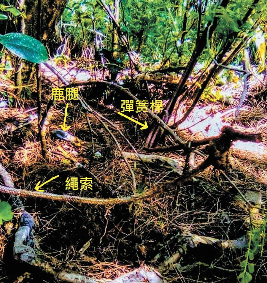14日社頂社區風聲發現鹿骨骸且周邊還有鐵絲、繩索,懷疑梅花鹿慘遭獵殺,盼墾管處給予協助。(謝佳潾翻攝)