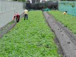 選舉年利多 有機農:設施補助仍不足