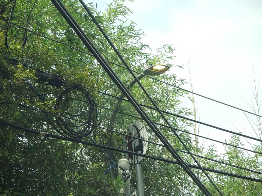 路燈大白天亮著讓路過民眾很擔心電費問題。(邱立雅攝)