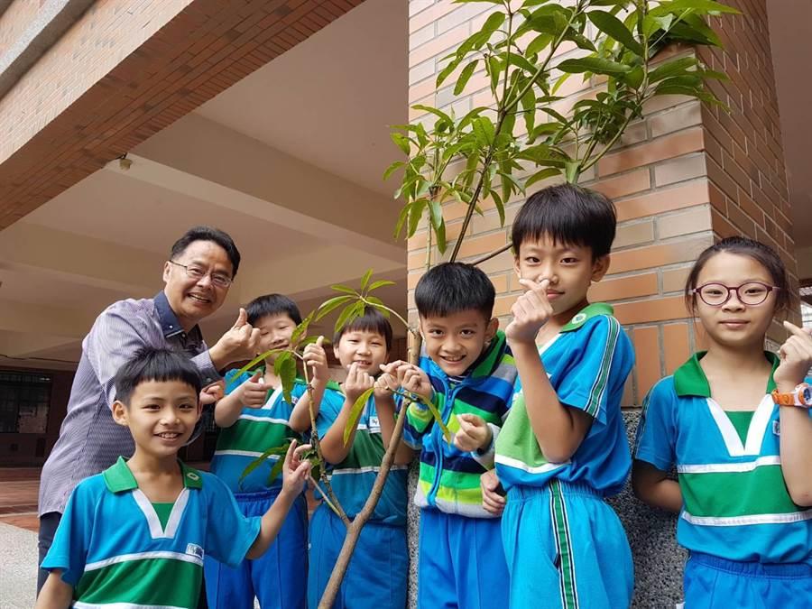樹義國小創校17年來,沒有專屬校樹。校方經學校家長會協助,種下「芒果樹」樹苗作為校樹。(張妍溱攝)