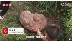 運氣逆天!工科學生學校旁散步發現6恐龍蛋