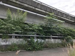 高鐵站區路旁雜草多 民批傷害門面