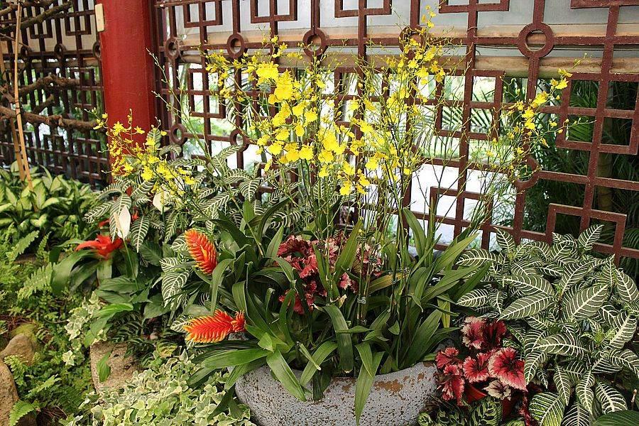 台灣非常受歡迎的切花品種檸檬綠,呈現亮眼的黃色。(台北市公園處官網)