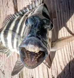女瞄到乾枯魚屍 驚見滿口人類牙齒
