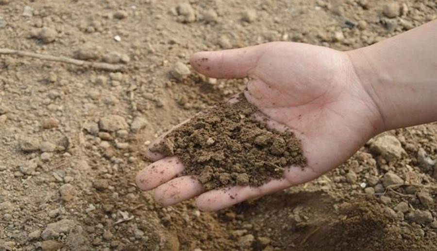 研究指出,土壤中含有益菌,可活化腦細胞,改善情緒。(圖/pixabay)