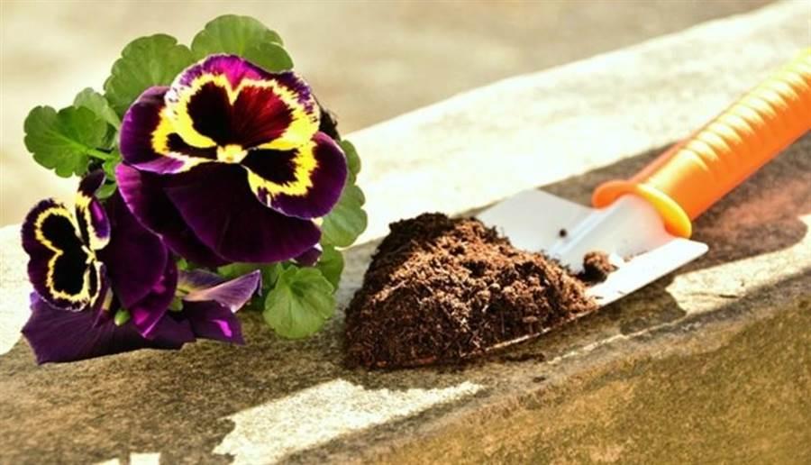 園藝讓人接觸大自然,與花草相伴,廣泛運用在心理治療。(圖片來源/pixabay)