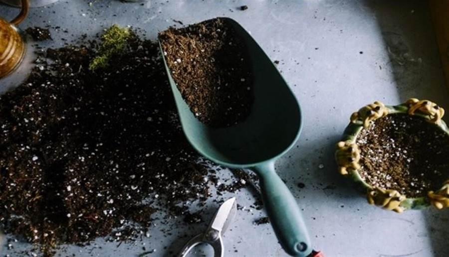 土壤含有許多有機菌類,其中「牝牛分枝桿菌」可刺激血清素分泌,有益紓解憂鬱。(圖片來源/pixabay)