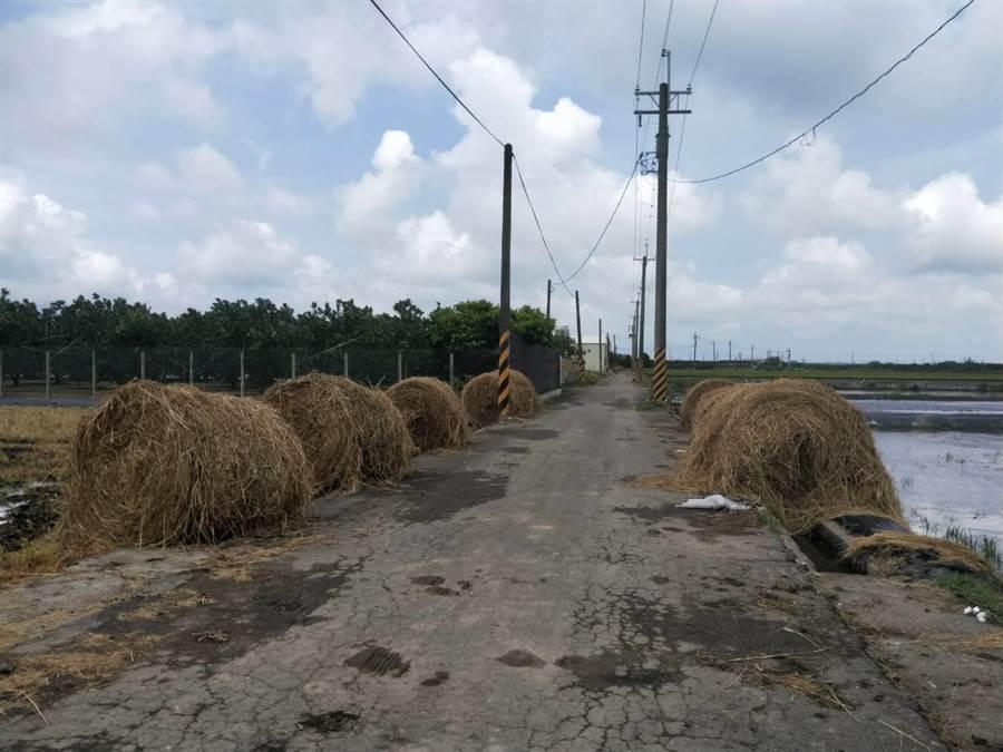 一期稻作進入結穗期等待熟成,一些較早種植的稻作也開始收割,近年環保意識抬頭,政府禁止農民露天燃燒稻草,因此堆置在田邊供業者回收及有需要的民眾自取。(莊曜聰攝)