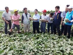517豪雨農損達450萬 農委會公告桃、竹現金救助