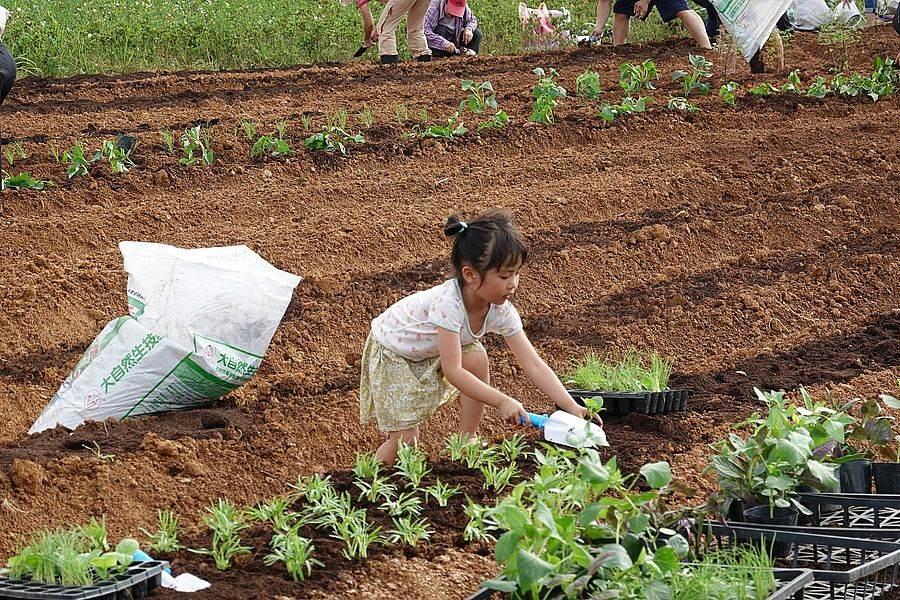 小朋友也開心體驗種菜。(新北市景觀處提供)