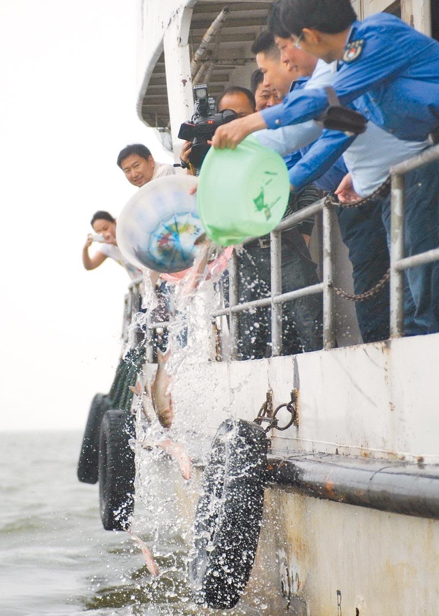 漁民早期濫捕導致江豚生存危機。近來在鄱陽湖江豚保護區集中投放魚種。(新華社)