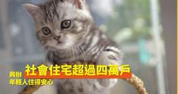 行政院520政績用萌貓騙點閱 狗派怒了!