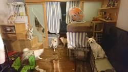 警員14坪屋養25隻狗  鄰居難忍惡臭噪音快崩潰