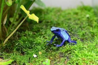 藍色青蛙、巨嘴鳥!「貨架上的雨林」特展揭秘趣