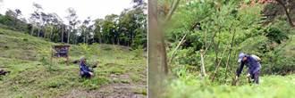 2.5萬棵小樹苗茁壯 日月光造林有成