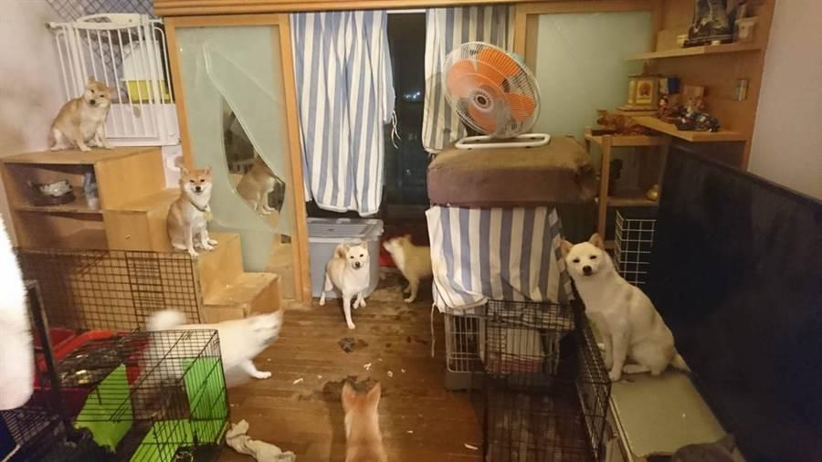 林姓男子在14坪空間養了25隻狗。(譚宇哲翻攝)
