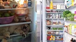 6大水果別放冰箱!恐成細菌溫床吃壞肚