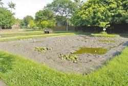北港生態池變泥地 待整修