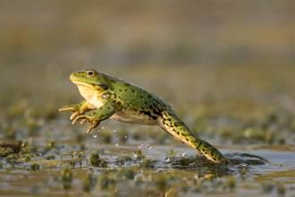 男童見青蛙嚇到哭 豬隊友一戳GG