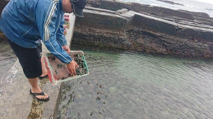 贡寮鲍养殖户吴鸿铭正神情专注的将一篮篮九孔苗均匀的洒入养殖池中。