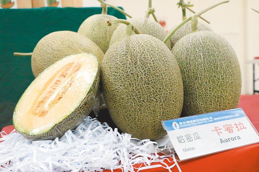新品種哈密瓜「卡蜜拉」皮薄果肉厚且口感香脆,受到不少消費者青睞。(張亦惠攝)