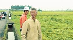 一期稻作快收割 慘遭大雨打趴