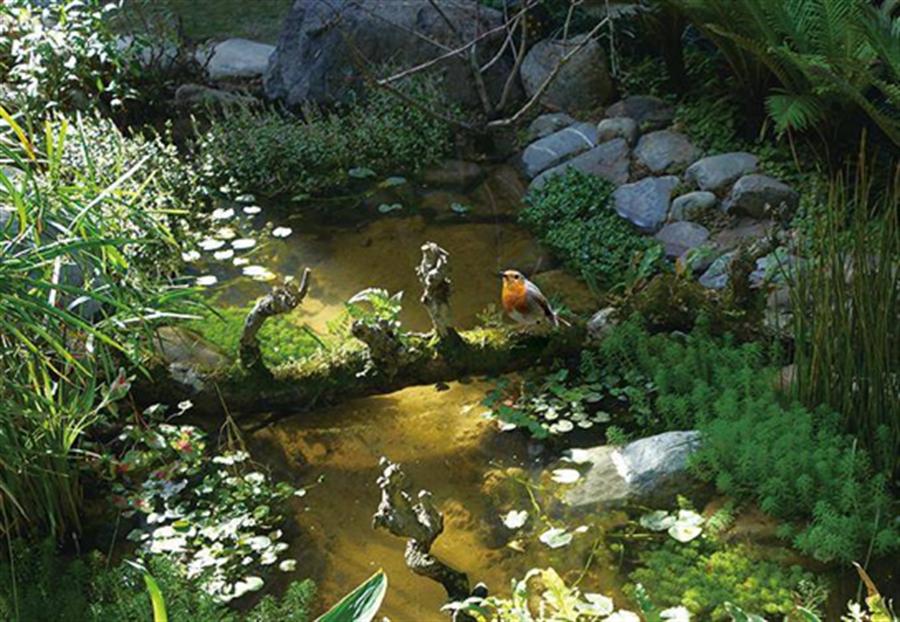 「深耕11」中庭生態池,加上原生樹種經常吸引原生鳥類、青蛙、瓢蟲、獨角仙等生物覓食棲息。