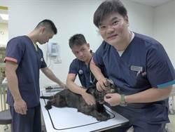 全台首座!流浪犬貓治療室解決浪浪醫療