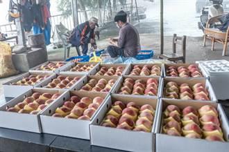 五峰5月桃遭「天災猴禍」辦4場展售幫農民
