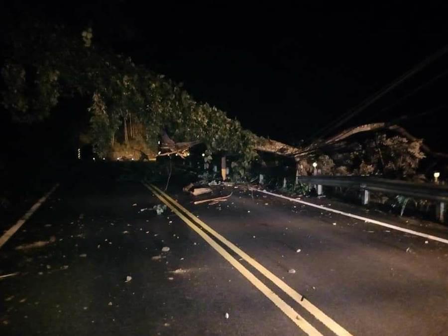 台21線0.5K發生大樹倒塌,巨大樹幹橫倒路面,除造成交通中斷,並扯斷2根電桿,導致400餘戶停電。(王文吉翻攝)
