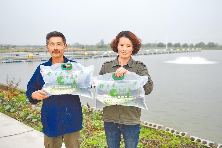 湖州市南潯區推廣「跑道養魚」模式,推動養殖業轉型升級。2019年5月15日,農場主盛素紅(右)與丈夫展示即將發貨的「跑道魚」。(新華社)