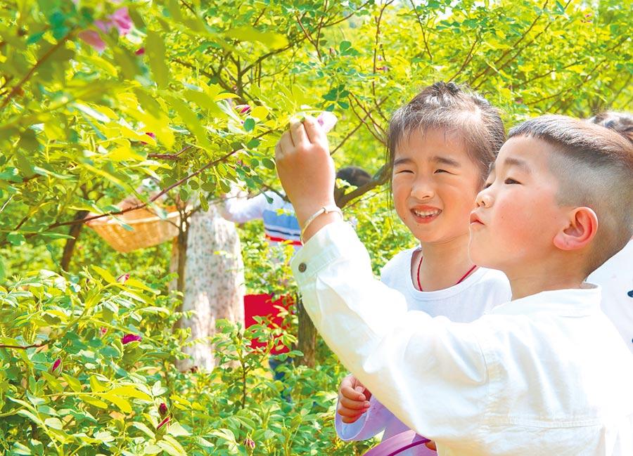 2019年4月17日,浙江省湖州市吳興區埭溪鎮中心幼兒園的孩子在玫瑰園體驗採摘玫瑰。(新華社)