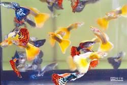 魚缸燈沒關…「白花瓣屍海」現形