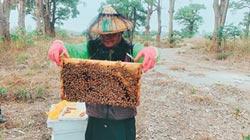 暖冬少雨 蜂蜜產量70年最差