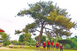 重光百年黑松 全國最美校樹
