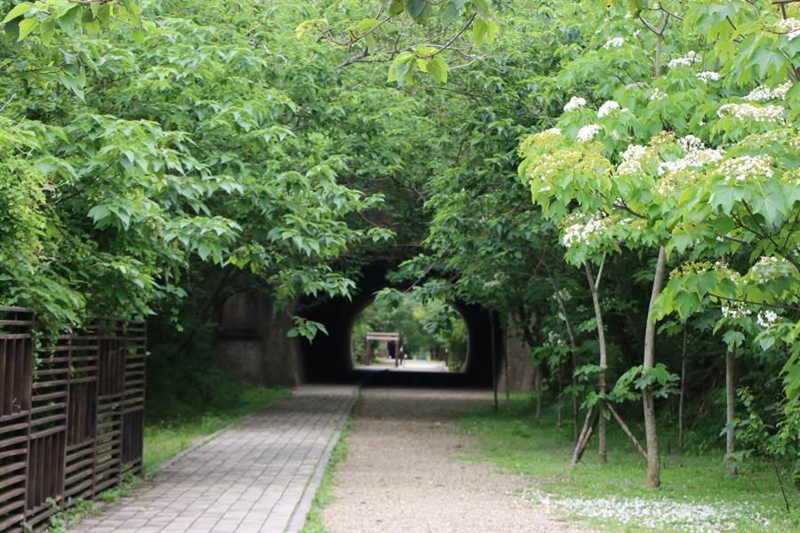 綠意盎然且充滿神祕氣息的崎頂子母隧道,吸引許多遊客慕名前往。(何冠嫻攝)