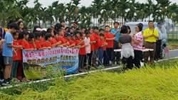 東門國小與六龜國小生合作慶收割稻作