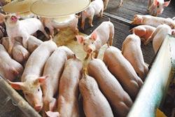 非洲豬瘟釀5%缺口 全球肉品價今年看漲