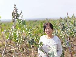 遙遠非洲的台商英雄們系列4-胡莉芸 在史瓦帝尼播種綠色產業