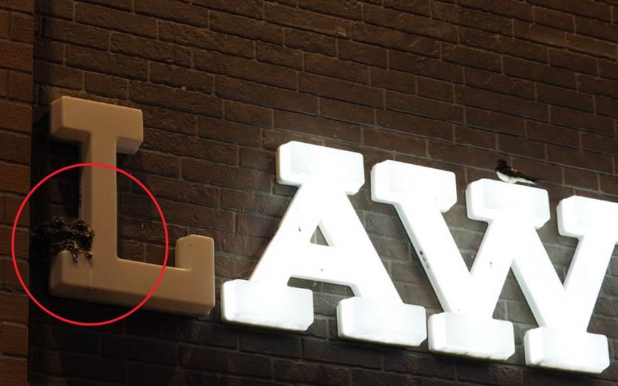 原來招牌的L字上有燕子築巢。(圖/ 翻攝自推特)