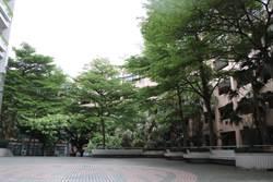 三重高中欖仁樹 結合文化祭推國際教育