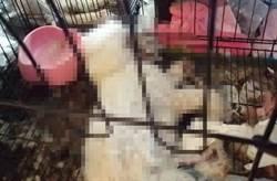 非法繁殖飼主落跑 10多隻名犬活活餓死