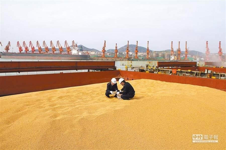大陸以抵制進口美國大豆,作為貿易報復。圖為陸方在海關抽檢大豆。(新華社資料照片)