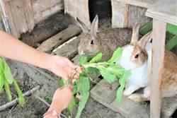 興華學童打造專屬白宮 收養流浪兔