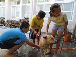 永安國小校狗伴童讀書 學生幫忙洗香香