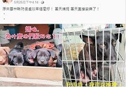 3犬遭安樂 雲縣府澄清非母帶子