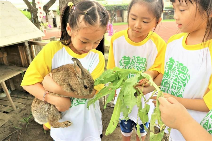 除了固定餵食飼料,孩子們在校園菜園裡自種的蔬菜也是兔兔們最愛的蔬菜大餐,營養又健康。(謝瓊雲攝)