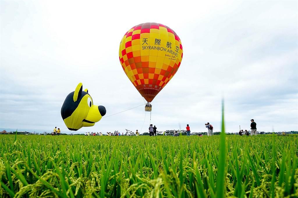 冬山鄉三奇村的稻間美徑吸引眾多遊客造訪,鄉公所舉辦熱氣球嘉年華,讓遊客從高空中欣賞美景。(李忠一攝)