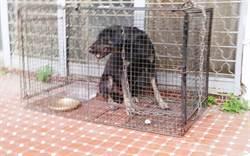 吹箭+捕網 害高三生摔車的黑狗兄被捕了